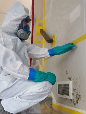 mold-inspection-specialist
